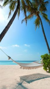 exotic-beach-palm-trees-hammock-android-wallpaper