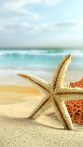 sea-star-summer-beach-android-wallpaper