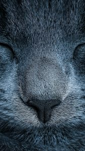 sleeping-cat-close-up-android-wallpaper