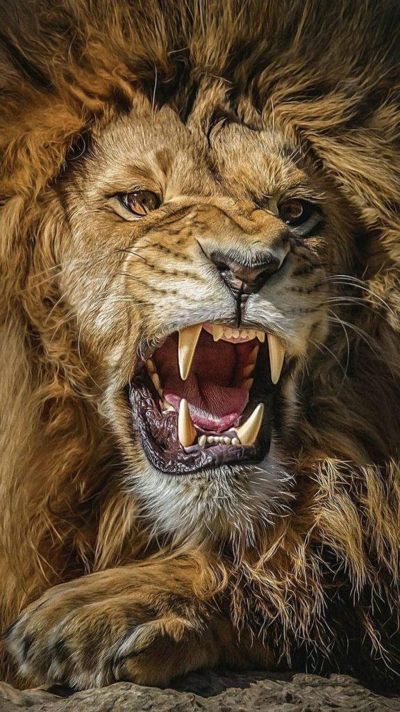 whatsapp profil fotograflari aslan